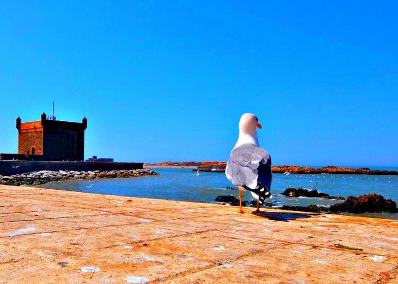 3 Day Trip From Marrakech to Essaouira and Taroudant